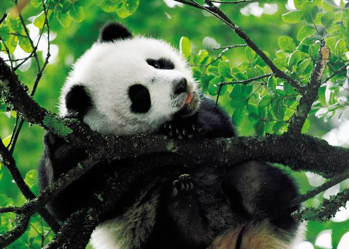 China Tours from Chengdu