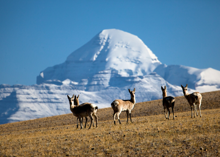 Kailash Travel Guide